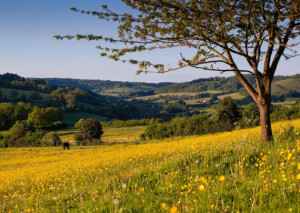 The Slad Valley in high summer, Stroud, Gloucestershire looking towards the Cotswolds AONB.